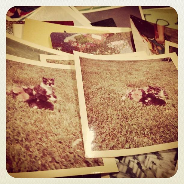 vintagecatpics